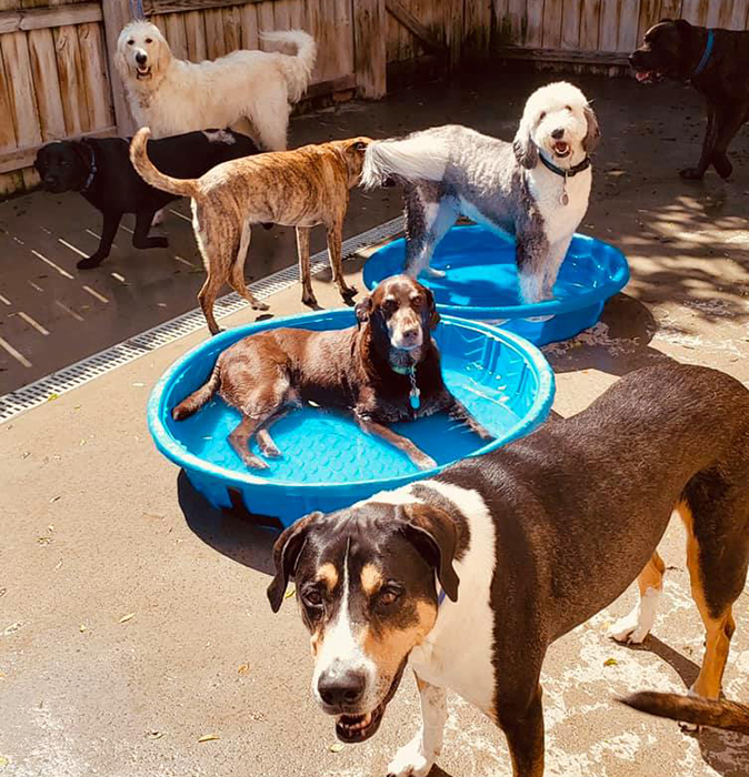 A large group of dogs cool off in plastic swimming pools in the Fisher's Friends outdoor yard