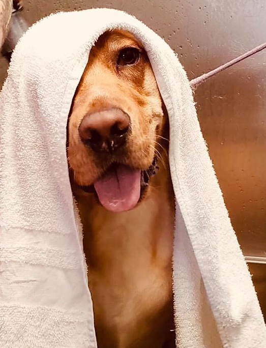 A dog bath and blow dry are part of the standard grooming services at the Fisher's Friends grooming spa