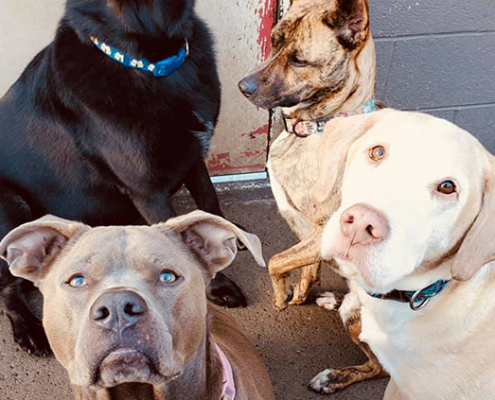 A group of four dogs of varying breeds relax in the outdoor yard at Fisher's Friends Dog Daycare